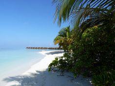 Vilamendhoo Island Resort Spa, Alif Dhaal (Sud Ari) Atoll, Maldives Island Resort, Maldives, Resort Spa, Diving, Travelling, Paradise, The Maldives, Snorkeling, Tomatoes