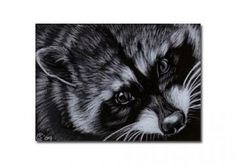 RACCOON 6 portrait woodland critter pencil painting Sandrine Curtiss Art Limited Edition Print ACEO by Sandrinesgallery
