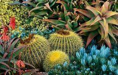 Si son preciosas en solitario, imaginaos el efecto de una composición cuidada en el jardín. Recopilación de jardines que te hará soñar.