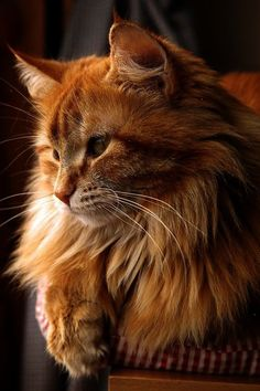 Lion Look Out Window Portrait By Fishermang On DeviantART ...