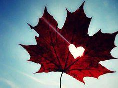 Love herfst