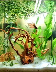 Amazing Aquascape Freshwater Gallery Ideas 69