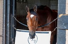 To let Patch adjust to his new vision, Pletcher sent the colt to his father, J.J. Pletcher, at Payton Training Center, placing Patch back in the Ocala area. What his connections thought would be a struggle & a journey ended up not being a bother to Patch. The son of Union Rags took the whole ordeal in stride & rejoined his trainer at Palm Beach Downs in October. On 2/18/17, Patch stretched out to a mile at Gulfstream & raced in 3rd before chasing down the lead horse to break his maiden by 1…