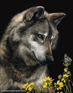 Hyper Realistic Scratchboard Illustrations By Cathy Sheeter - Hyper Realistic Scratchboard Illustrations By Cathy Sheeter American Artist Cathy Sheeter Creates Realistic Scratch Drawings On Ink Coated Boards Many People Cant Believe That My Very Rea Beautiful Wolves, Animals Beautiful, Cute Animals, Wild Animals, Baby Animals, Wolf Photos, Wolf Pictures, Art Scratchboard, Wolf Hybrid