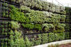 Edible Garden Wallls