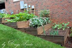 The plants in our vegetable garden are filling in nicely...some with a little trial and tribulation! Shown here is what we call...