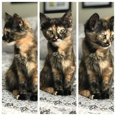 When I asked Clementine to show me her best side cats funny pictures I Love Cats, Crazy Cats, Cute Cats, Pretty Cats, Beautiful Cats, Kittens Cutest, Cats And Kittens, Orange Kittens, Tortie Kitten