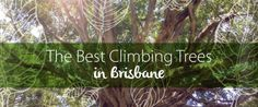 Where exactly are the #best #climbing #trees in #Brisbane? Find out here!