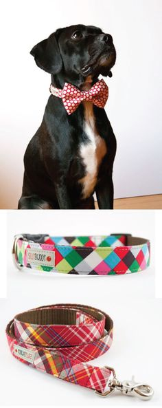 bow-tie dog collars from Silly Buddy on Etsy--for Dexter!