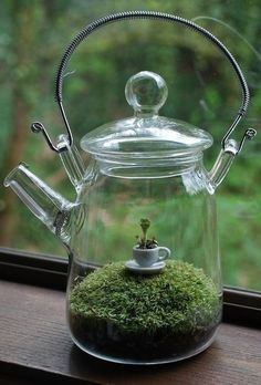 Glass tea pot terrarium: How clever this is! I will try to remember to find interesting clear glass containers to use for terrariums. Air Plants, Indoor Plants, Cactus Plants, Deco Nature, Moss Terrarium, Terrarium Table, Terrarium Wedding, Terrarium Plants, Succulent Planters