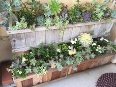 Raised cedar box for succulents by Laura Greaves