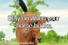 I did this a couple lessons ago when Dex started bucking when I cantered a certain way, he was fine the other way but he had a coup,e ribs out so he didn't really like me cantering that way