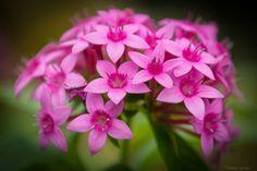 pinkblumen:  {❀} /frank_grant1