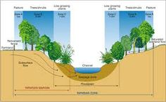 riparian zone water management, water collection, presentation design,  permaculture, urban design,