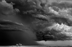Mitch Dobrowner, Trees-Clouds. Is this for real? Amazing. Black and white plain, maybe a tornado imminent.