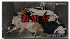 "Japan - Establishment of the ""ordinance aimed at culling zero""! Petition · 「殺処分ゼロを目指す!」宣言と「殺処分ゼロを目指す条例」の制定を! · Change.org"