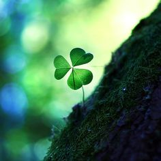 Luckiest Girl In The World Clover Plant, Leaf Clover, Quotes En Espanol, General Quotes, Irish Eyes, Sunset Photography, Human Nature, Spanish Quotes, Spiritual Inspiration