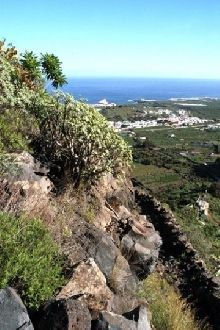 Sendero de Talavera, en Los Silos, Tenerife, Santa Cruz de Tenerife.