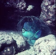 11 bizarre species to look for on a Great Barrier Reef dive [pics] - Matador Network