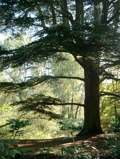ENGLAND: Attingham Park