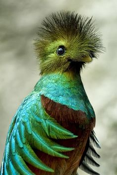 Quetzal- the bird once worshipped as a God.