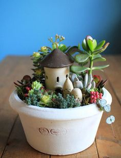 Hana atelier sale maple planting succulents: image of Succulents In Containers, Cacti And Succulents, Planting Succulents, Terrarium Plants, Succulent Terrarium, Succulent Gardening, Garden Plants, Little Gardens, Mini Fairy Garden