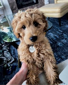 MONEY 10 K Poodle Dog Million Dollar Bills Collectible Novelty FAKE ITEM