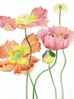 poppies by Mango Frooty, via Flickr