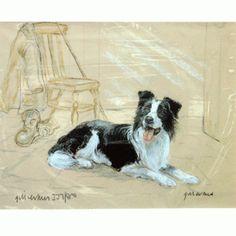 Corinium Fine Art Dog Prints - Border Collie