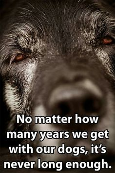 """No matter how many years we get with our dogs, it's never long enough."""