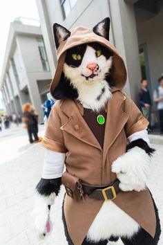 Twitter Fursuit Paws, Fursuit Head, Furry Wolf, Deadpool Pikachu, Pokemon Plush, Epic Cosplay, Anthro Furry, Cute Kittens, Furry Art