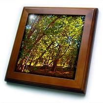 3dRose - Jos Fauxtographee Realistic - Posturized Green and Yellow Leaves on Trees in The Dixie National Forest of Utah - Framed Tiles
