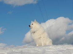 やはり、飼い主が寒さに耐えられないのか? 快晴なのに・・・誰もいません。