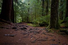 Rain forests are full of abundant vegetation and life. So, why does the soil change when the trees are cut down?