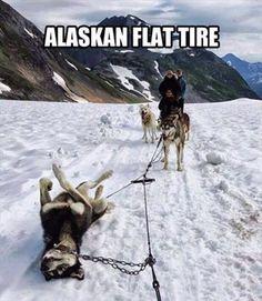 Alaskan flat tire http://ibeebz.com