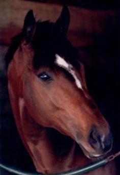 Images of Famous  race horses | cigar-famous race horse photo geesavedmylife's photos - Buzznet