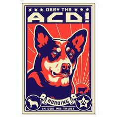 Obey the Australian Cattle Dog! Large Poster> AUSTRALIAN CATTLE DICTATOR> Obey the pure breed! The Dog Revolution