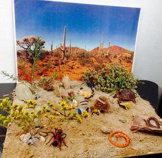 Maqueta desierto School Science Projects, Stem Projects, Animal Projects, Science For Kids, Projects For Kids, Art Projects, Desert Ecosystem, Desert Biome, Desert Diorama