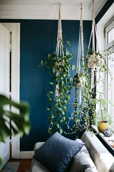 Hängepflanzen bringen Atmosphäre in jede Wohnung! Hanging plants bring atmosphere to every home! Related posts: Embelish any room of your home with this eye catching hanging plant's decor Dark Living Rooms, Home And Living, Living Spaces, Living Room Decor, Dark Rooms, Dining Room, Plants In Living Room, Blue Living Room Walls, Decor Room