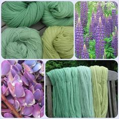 "Dyeing with lupins. The blog is in foriegn, a germanic language I'd guess, google translate will pobably help, all I got was ""lupinen"" and ""200g merino"". which were both pretty easy to translate"