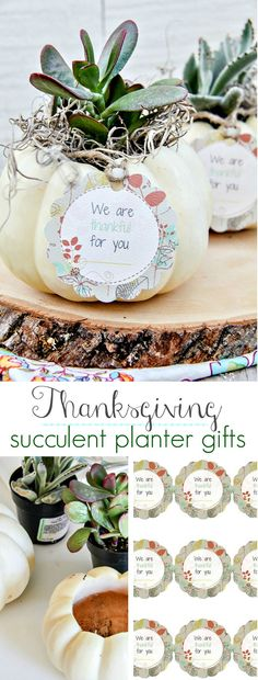 Thanksgiving Succulent Planter Gifts