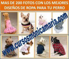 curso corte confeccion ropa perros fotos ropa mascotas obsequio