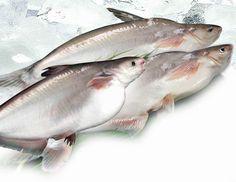 Moja córcia poprosiła mnie dzisiaj abym przygotowała na obiad rybę pangę bo nie pamięta jak smakuje . Tłumaczenia, że jadła ją wielokrotnie i bardzo jej smakowała nic nie dały. Uparła się, że musi jej skosztować jeszcze raz bo inaczej nie będzie wiedziała czy ją lubi, a koleżanki pytały czy ryba … Fish, Meat, Recipes, Whitefish, Health, Environment, Mercury, Finance, Second Best