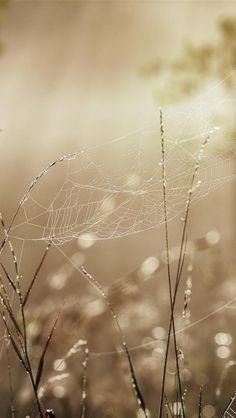 Spinnenweb met druppeltjes.....