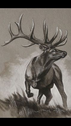 x charcoal on artist quality gray card stock. All original sketches are drawn using only archival materials. Charcoal drawings prepared on artist quality card stock and sealed with a professi Animal Sketches, Animal Drawings, Horse Drawings, Deer Art, Moose Art, Hirsch Tattoos, Elk Drawing, Arte Equina, Arte Black