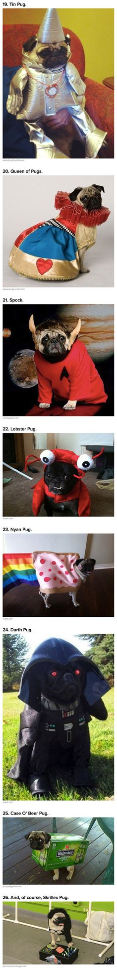 26 Geeky Costumes That Show Why Pugs Love Halloween - TechEBlog