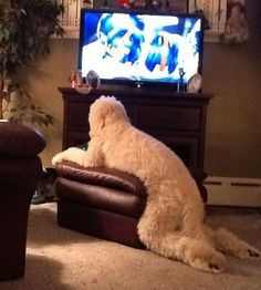 funny-cats-dogs-stuck-furniture-21http://www.boredpanda.com/funny-cats-dogs-stuck-furniture-animal-fails/
