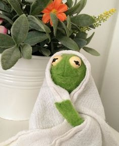 Image about cute in kermit by carmyna ✿ on We Heart It Cute Memes, Dankest Memes, Funny Memes, Sapo Kermit, Sapo Meme, Frog Meme, Kermit The Frog, Quality Memes, Wholesome Memes