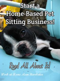 Start a Home-Based Pet Sitting Business! / Read All About It!