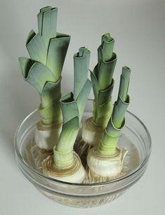 10 légumes qui repoussent dans l'eau                                                                                                                                                                                 Plus